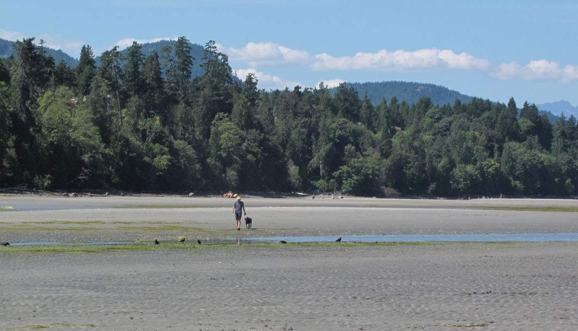 Dog walker at North Nanaimo beach