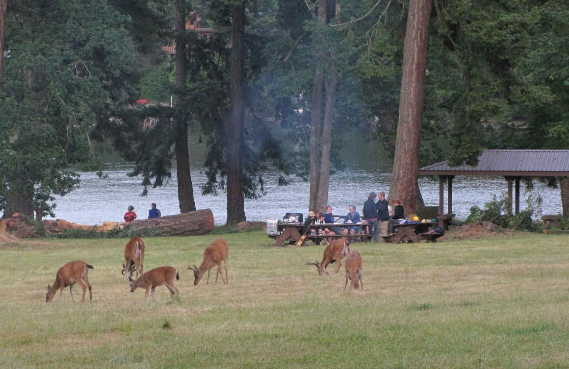 Deer and campers, Newcastle Island