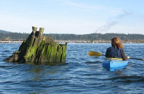 Kayaker in Nanaimo River Estuary