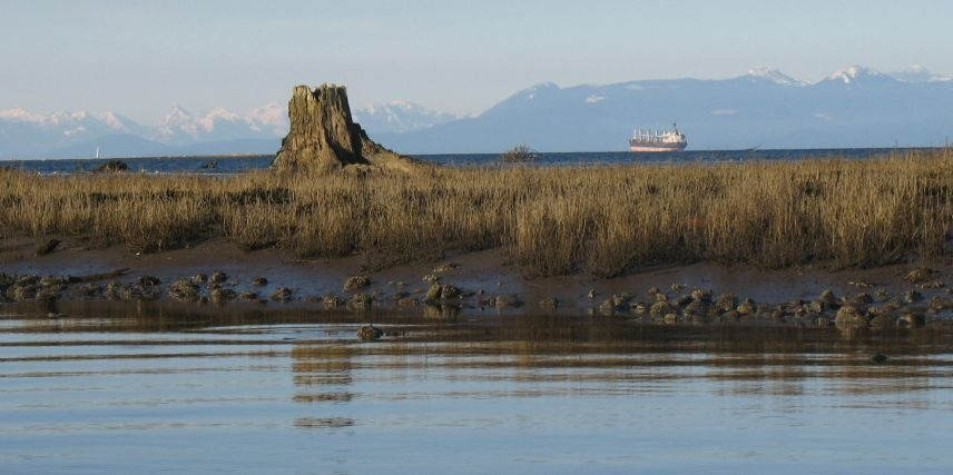 View of open water from Nanaimo River Estuary