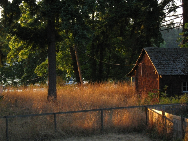 Grasses and rustic cabin